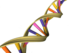 DNA Double Helix.png