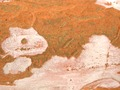 DSCN3784 Luma Apiculata bark.TIF
