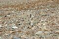 Dana Plateau Plot 118 (11878793103).jpg