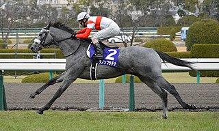 Danon Platina Japanese-bred Thoroughbred racehorse