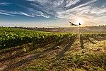 Delair.Wine field DT18.jpg