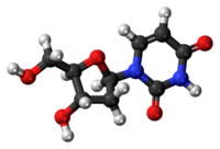 Ball-and-stick model of the deoxyuridine molecule