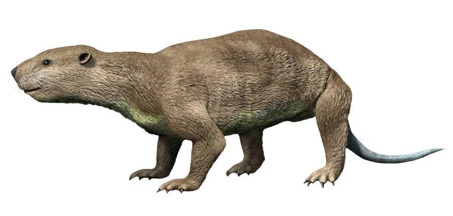 Didelphodon NT small