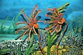 Diorama of a Silurian seafloor - crinoids, algae, corals (44804331765).jpg