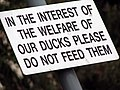 Do not feed our ducks - geograph.org.uk - 942538.jpg