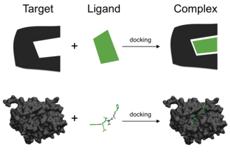 Docking (molecular) - Schematic illustration of docking a small molecule ligand (green) to a protein target (black) producing a stable complex.