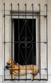 Dog in Buenos Aires, Argentina (15320337434).png