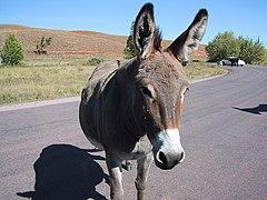 slike zrelog magarca Latina analni seks videa