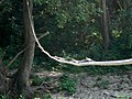 Dragonflys On The Rope - panoramio.jpg