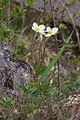 Duben vysenske kopce 36.jpg