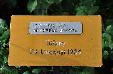 Duftrosengarten Rapperswil - Tiffany TH Lindqust 1954 2010-10-02 16-33-48.JPG