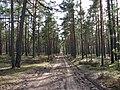 E67, Carnikavas novads, LV-2163, Latvia - panoramio.jpg