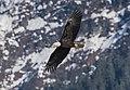 Eagle Mtn Sno 3723 (24828192794).jpg