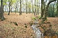 Edgware Brook, Stanmore - geograph.org.uk - 88466.jpg