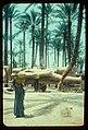 Egypt. Memphis. Colossus of Ramases II (i.e., Ramses II) in Memphis palm grove LOC matpc.23070.jpg