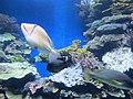 Eilat Coral World Underwater Observatory 23.jpg