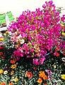 El Zohour Showroomمعرض الزهور بحديقة الاورمان 5.jpg