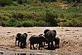 Elephants, Tarangire National Park (5) (28671103666).jpg