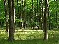 Embley Wood - geograph.org.uk - 448665.jpg