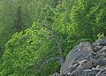 Enli naturreservat (565501487).jpg
