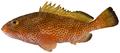 Epinephelus guttatus - pone.0010676.g050.png