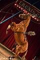 Eroni S Circus 03 08 2013 (43204504).jpeg