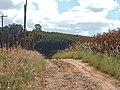 Estrada Rural. - panoramio (1).jpg