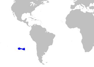 Dense-scale lantern shark species of fish