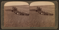 Evolution of the sickle and flail, 33 horse team combined harvester, Walla Walla, Washington, from Robert N. Dennis collection of stereoscopic views 4.png