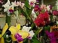 Exposição Nacional de Orquídeas de Catanduva no Colégio Nossa Senhora do Calvário - Colegião - panoramio (5).jpg