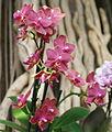 Exposition mille et une orchidées 4.jpg