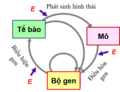 Extended Evolutionary Synthesis.png
