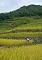 FARMER AT BATAD.jpg