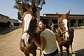 FEMA - 33368 - Large animal shelter in California.jpg