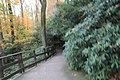 FallingWaters fall colors - panoramio (4).jpg