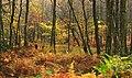 Falling Spring Trail (8085125600).jpg