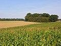 Farmland, Ramsbury - geograph.org.uk - 987907.jpg