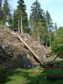 Felled trees - a different angle (475885221).jpg