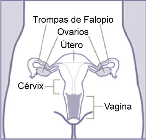 Oreganos reproductores femeninos yahoo dating