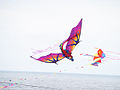 Festival of the Winds, LX - Festival of the Winds 2013.jpg