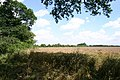 Field boundary south of Wellingham - geograph.org.uk - 504519.jpg
