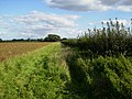 Field margin east of Great Habton - geograph.org.uk - 248628.jpg