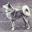 Finnish Pom from 1915.JPG