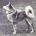 Finnish Pom from 1915.JPG