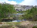 Fjellbjørkeskog.jpg