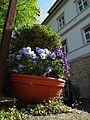 Fleischergasse Pirna 119147117.jpg