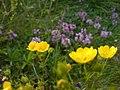 Fleurs. Juillet 2007 - panoramio - anagh (2).jpg