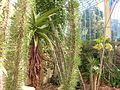 Flickr - brewbooks - Palm House.jpg