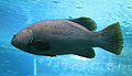 Flickr - uShaka Sea World.jpg