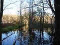 Flooded path in the Teufelsbruch swamp 30.jpg